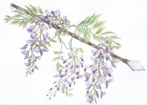 Wisteria-covered Spear, the symbol of Kindra and Kaye. (Wisteria is Aleda's sacred flower)