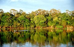 Amazonia, By Andre Deak (Flickr) [CC-BY-2.0 (http://creativecommons.org/licenses/by/2.0)], via Wikimedia Commons