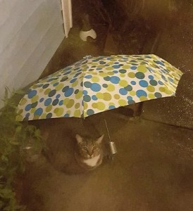 It rained so much even the cats learned to use umbrellas.